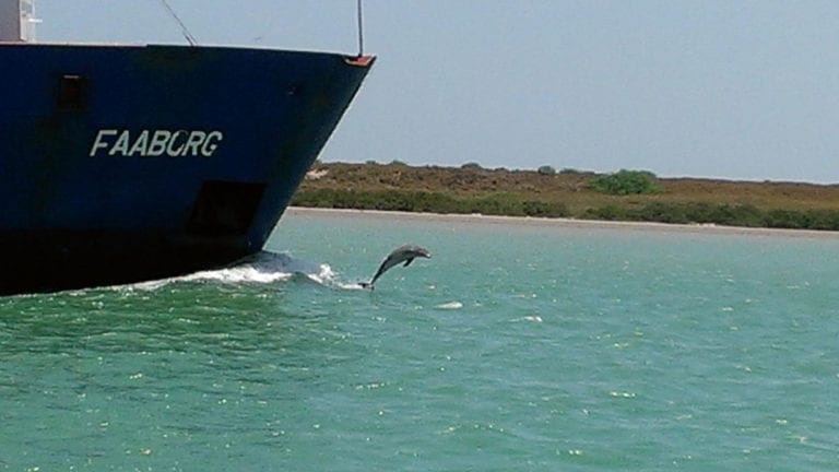 Port of Brownsville Dolphin Tour